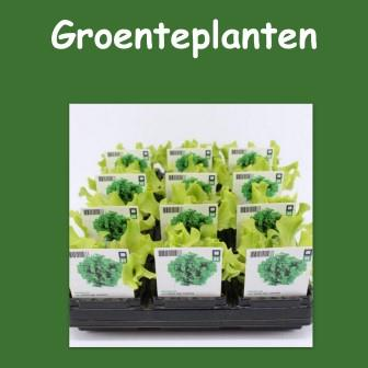 Groenteplanten