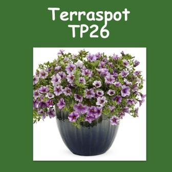 Terraspot