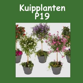Kuipplanten
