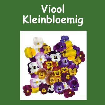 Viool kleinbloemig